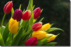 bigstockphoto_Tulip__filtered_253022